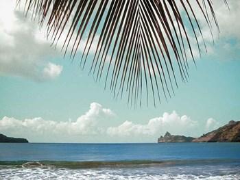 Palm Seashore by Ed Goldstein art print