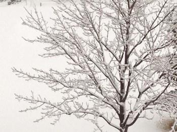 Winter Serenity by Douglas Thom art print