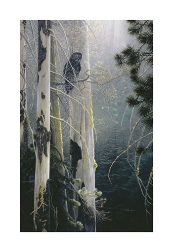 Silent Sentinel (Owl) by Stephen Lyman art print