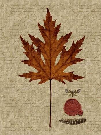 Autumn Leaf I by Sandy Lloyd art print