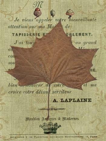 Autumn Leaf II by Sandy Lloyd art print