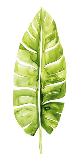 Banana Leaf Study II by Grace Popp art print