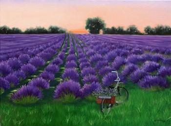 Fleur de Lavande by Julie Peterson art print
